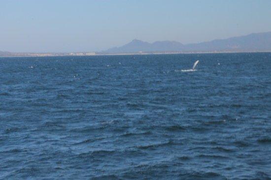 Marietas Islands : Whale watching at Islas Marietas