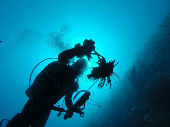 St. Croix Ultimate  Bluewater Adventures (SCUBA), Inc.: The Lion