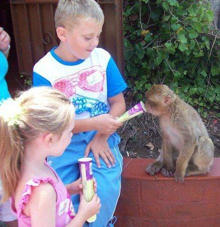 Monkey Park : my nephew feeding the monkey