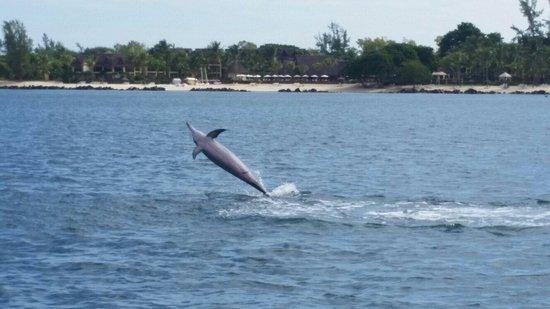 Bois d'Oiseaux: Dolphins at Ile Aux Benitiers