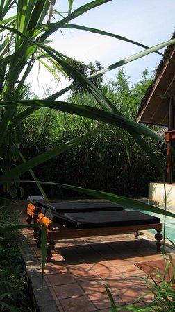 Jetwing Vil Uyana: Near Pool