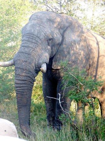 Notten's Bush Camp: elefantes