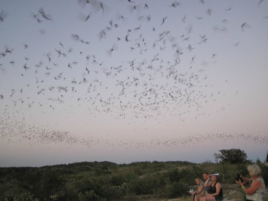 Frio Cave: bats flying