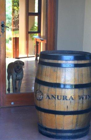 Anura Vineyards: Boas vindas !!!