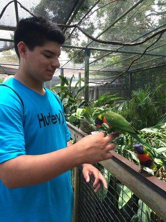 Brevard Zoo: friendly birds