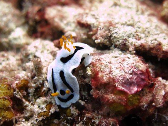 Borneo Divers Mabul Island Resort: Beautiful underwater