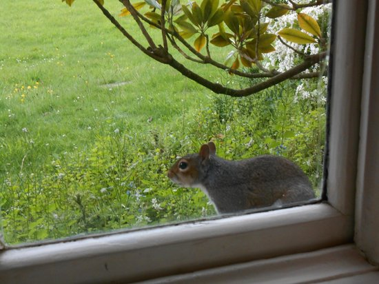 Warner Leisure Hotels Bodelwyddan Castle Historic Hotel: A visitor to my window (seconds after I closed it)