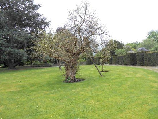 Warner Leisure Hotels Bodelwyddan Castle Historic Hotel : 250 year old tree