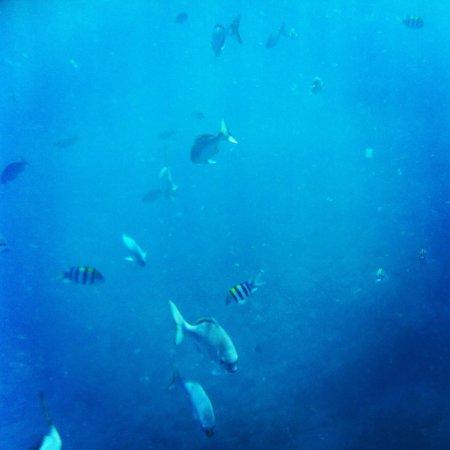 Kauai Sea Rider Snorkel & Whale Watching Tours: Like swimming in an aquarium