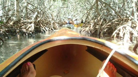 Blue Planet Kayak Eco-Tours : Moving through the mangroves