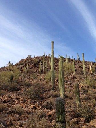 JW Marriott Tucson Starr Pass Resort & Spa: Along Hidden Canyon Trail