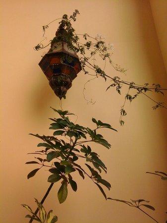 Riad Zitouna: lampe marocaine