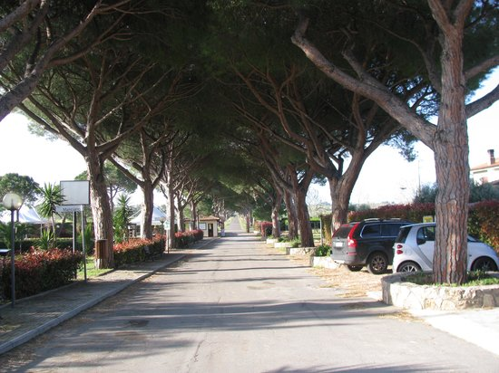 Resort Capalbio: Il viale