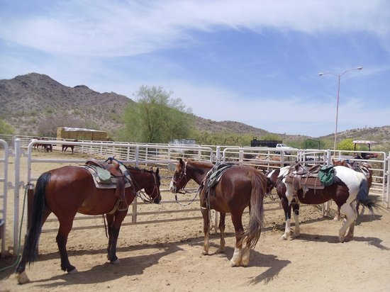 Corral West Horse Adventures: Horses