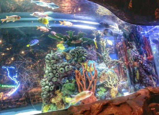 Rainforest Cafe: Beautifully Decorated Fishtanks