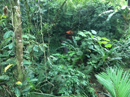Nayara Hotel, Spa & Gardens : Garden