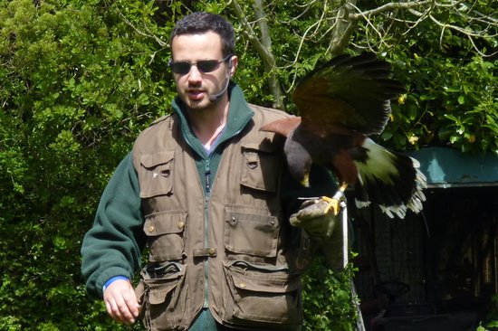 Liberty's Owl Raptor and Reptile Centre: The demonstrator