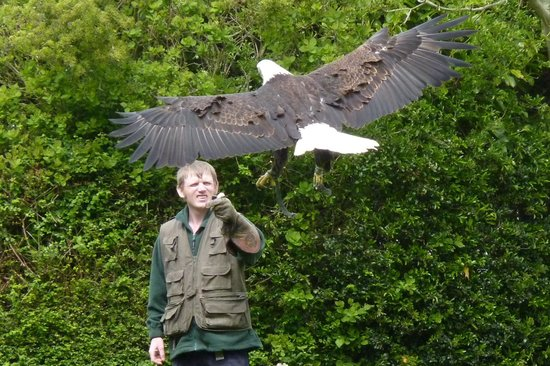 Liberty's Owl Raptor and Reptile Centre: In flight