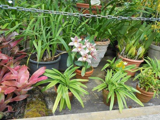 Jardín Botánico: preciosas orquideas