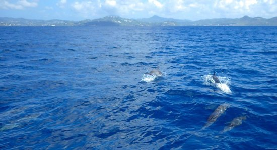 Serenity Vacations and Tours: Dolphins swimming with our boat