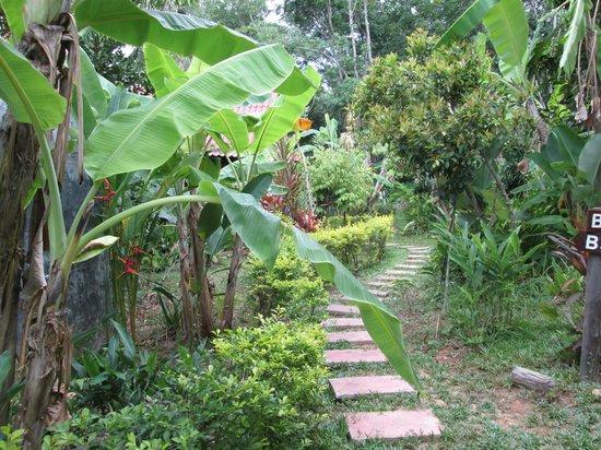 Tenta Nakara : Path to bungalow