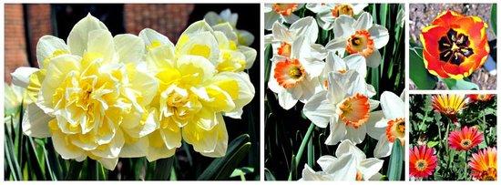 Cantigny Park : Spring flowers
