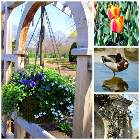 Cantigny Park: Collage of flowers