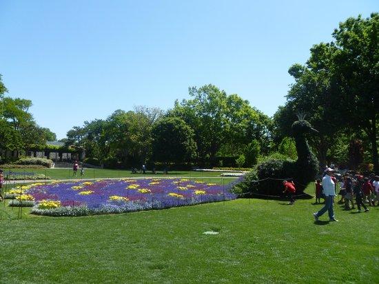 Arboretum et jardin botanique de Dallas : peacock