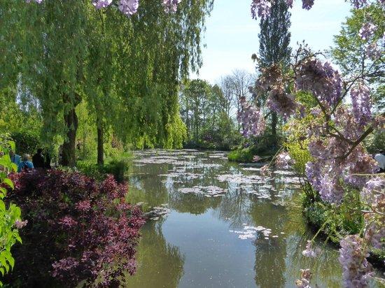 Maison et jardins de Claude Monet : Monet's lilly pond 10