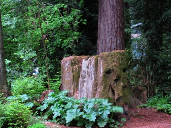 Rio Nido Lodge at the Russian River: Just outside your door -- lovely redwood grove