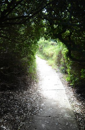 Fernkloof Nature Reserve: Wooded parts of the Cliff Path