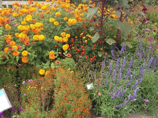 Matthaei Botanical Gardens: Late summer at the Arboretum