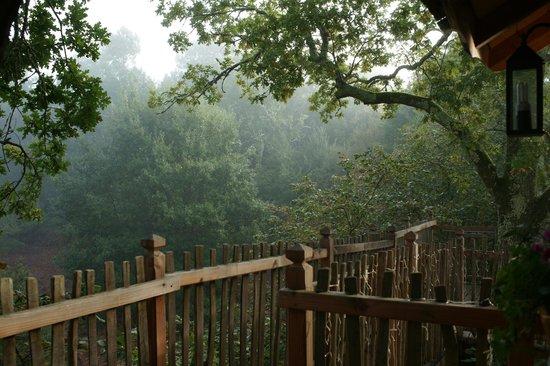 Le Gîte à JT : le mystère de la forêt