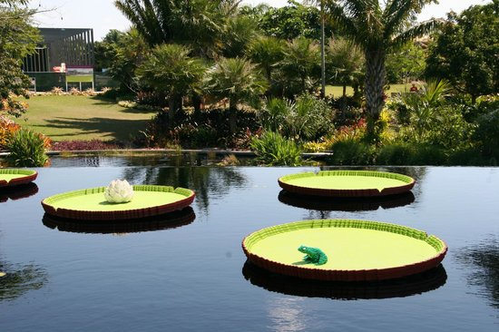 Naples Botanical Garden : Lily pads, a lily flower and a frog