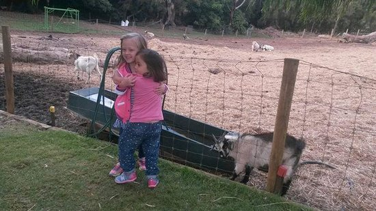 Countrylife Farm: having fun