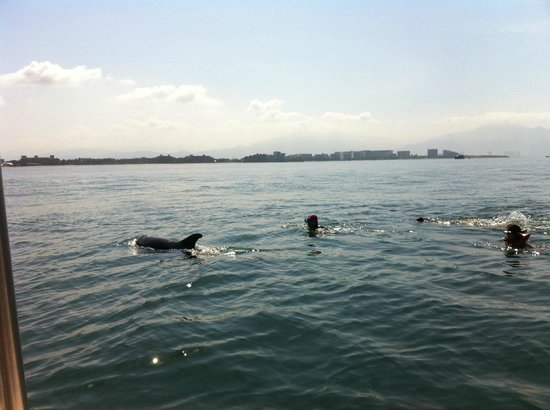 Wildlife Connection: the dolphins do what they want