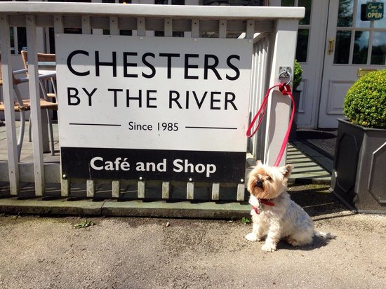 Chesters By The River: Harold licking his lips in approval