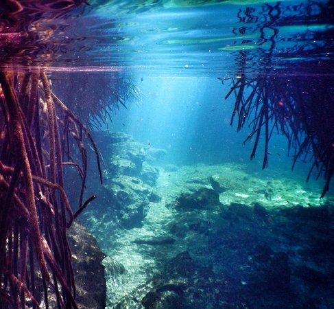 Mezzanine Colibri Boutique Hotel : The Manatee Cenote. Our personal fav!!