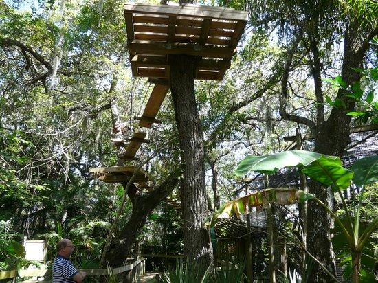 Brevard Zoo: Tree Top Trek