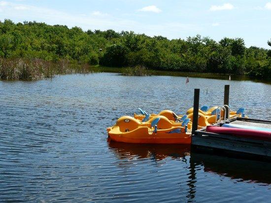 Brevard Zoo: Wetlands Paddleboats Dock.