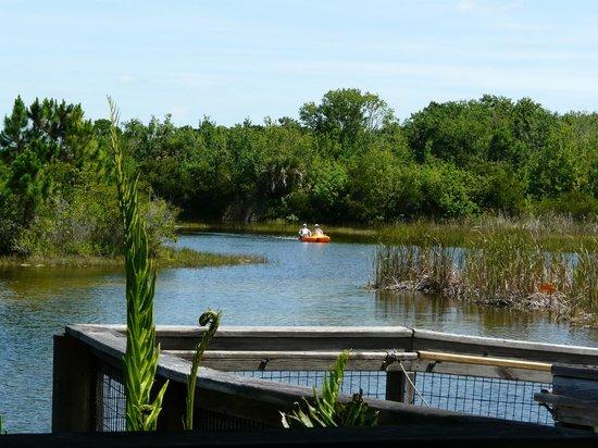 Brevard Zoo: Paddleboaters enjoying the wetlands.