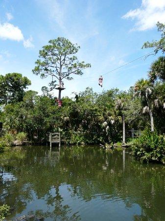 Brevard Zoo: Trre Top Trek over the Gator Pond