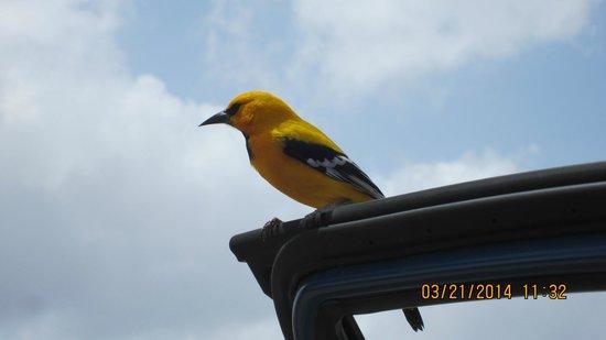 Boca Slagbaai: local bird