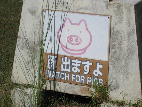 Leo Palace Resort: 豚出ますよ