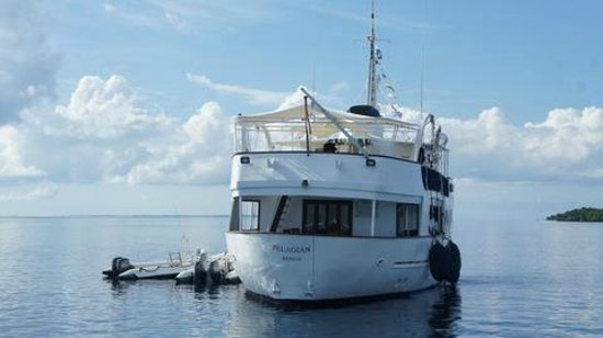 Wakatobi Dive Resort: Arrival on Pelagian
