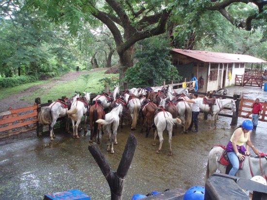 Hacienda Guachipelin: Horses