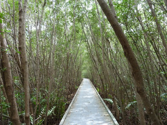 Four Mile Cove Ecological Preserve : Nice walkway for anyone.