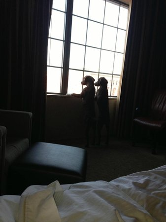Westin St. Louis: The pups loved their stay at the Westin