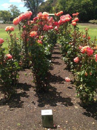 Victoria Esplanade Gardens: Rose Garden