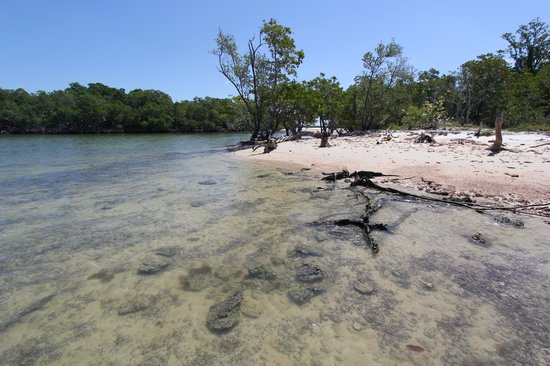 Everglades Backcountry Experience with Capt. Rodney Raffield: Where the Gulf of Mexico meets the Ten Thousand Islands! Jewell Key, FL